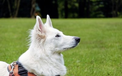 Are We Emotionally Trained and Conditioned Like Our Dogs?